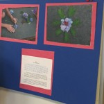 IMG_4338_home-schooling_project_2